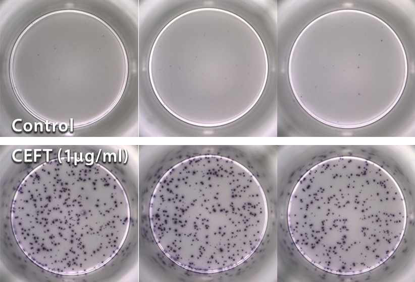 product t cell assay services step 2