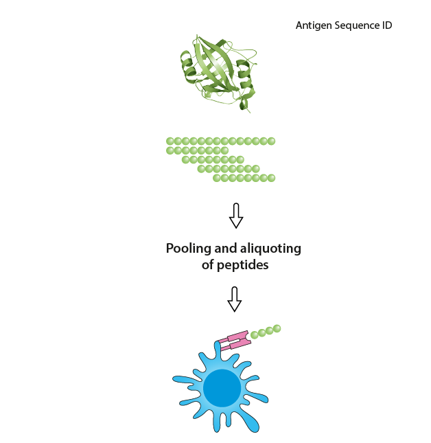 use of the antigen spanning peptide pool