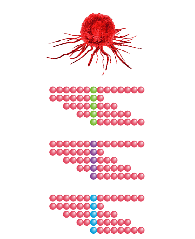 use of the neo epitope library