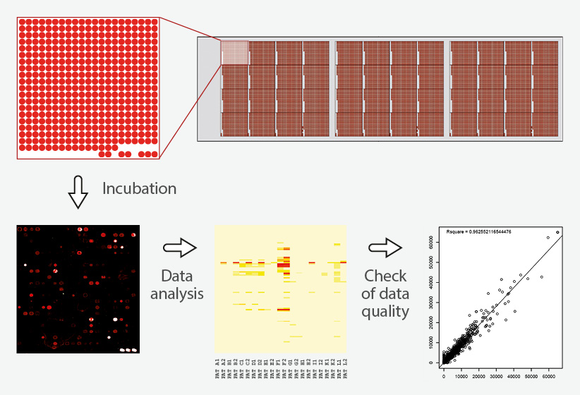 peptide microarray incubation and assay service