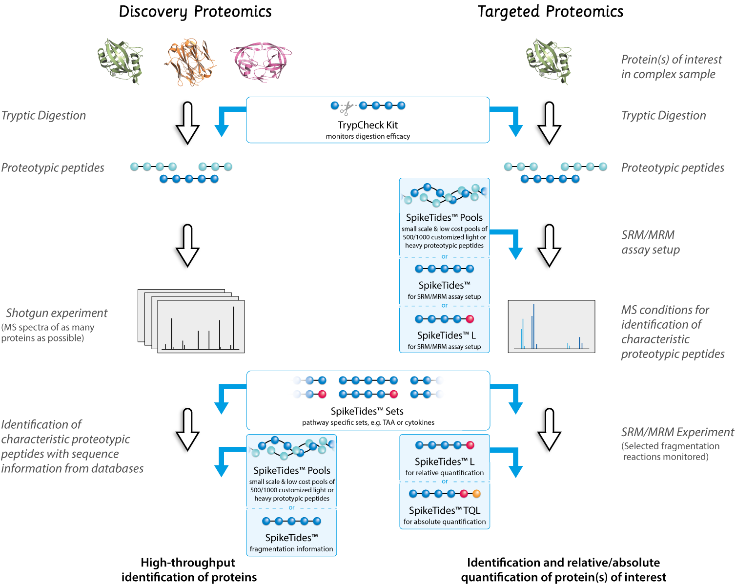 discovery and targeted proteomics